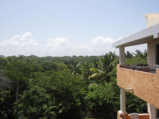 Vistas desde la habitacion... Wellcome to paradise